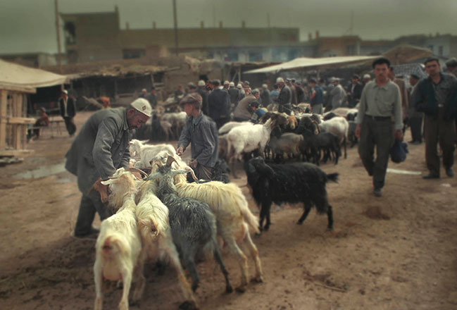Gabriel Giovanetti | VIEW GALLERY-Kashgar: The Goats-2013